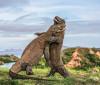 Od Komodo zmajeva do spori lorija