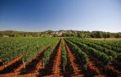 Autentična vina s crvene zemlje