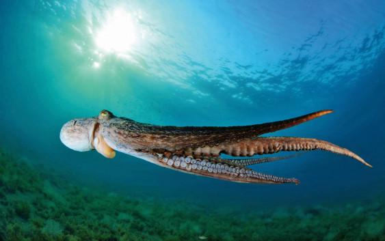 DAMIR ZURUB: Svjetski prvak koji roniti mora